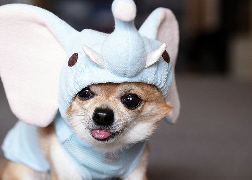 animals-dressed-as-other-animals-13